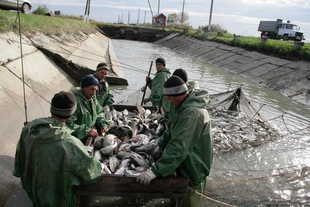 рыбалка малеванный краснодарский край
